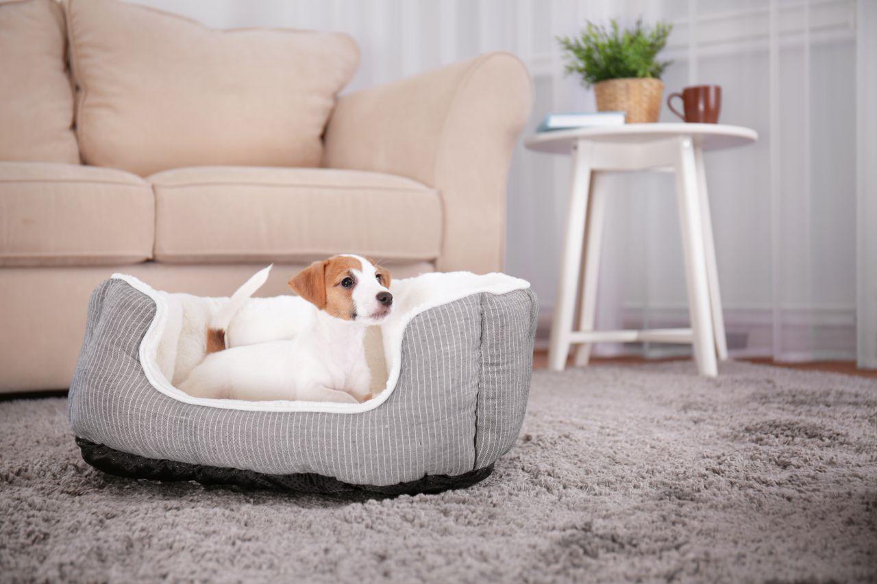 Jak stworzyć psu przytulny kącik w domu?